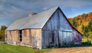 LOOKING FOR BARN