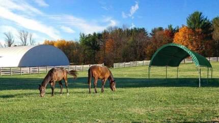 Horse Barn Shelters in Australia