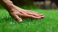 Lawn care for Westwood, St James and Charleswood