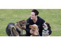 Puppy & Dog Training Ipswich & Stowmarket