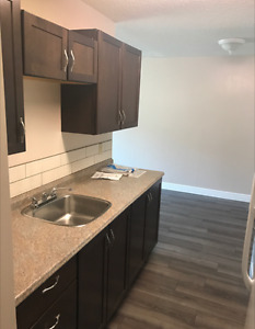 NEWLY RENOVATED 1 BR APT - DOWNTOWN