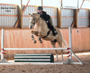 Horse riding lessons on your horse or ours!