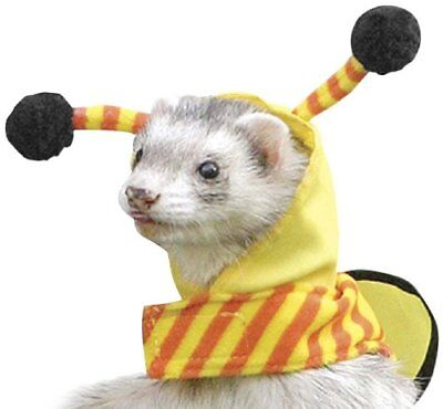 BEE Costume for Ferrets - Marshall - Marshalls Costumes
