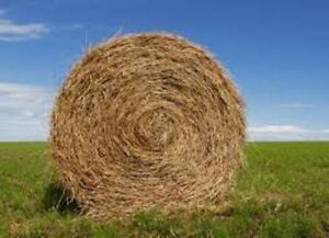Good Quality Round Hay Bales For Sale