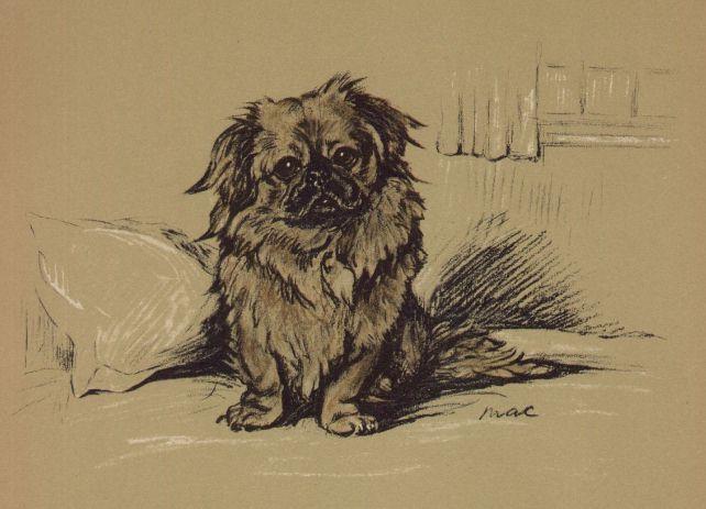 "Pekingese ""George"" - Lucy Dawson Dog Print - MATTED"