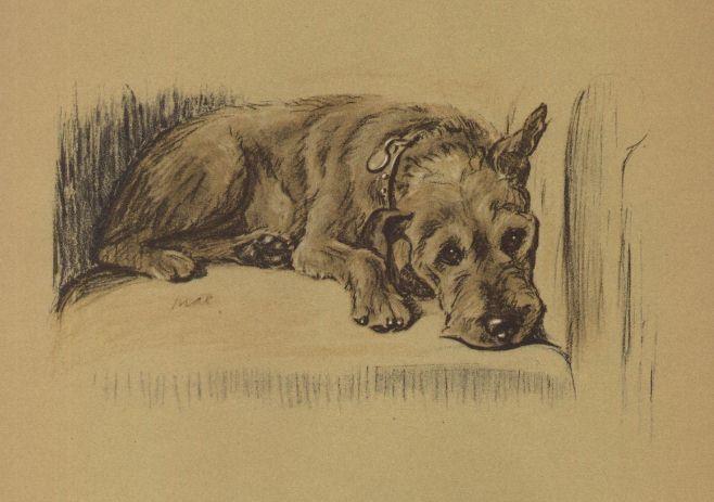 Irish Terrier - Lucy Dawson Dog Print - MATTED