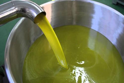 Organic Palestine 15 Liters Fresh Virgin Olives Oil 2020زيت زيتون فلسطين