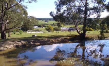Horse agistment available near Buninyong Buninyong Ballarat City Preview