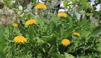 Weeding - Gardening Services