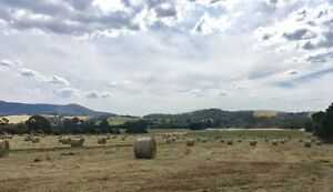 Hay Round Bales - MUST SELL Price Negotiable - 440 Available Healesville Yarra Ranges Preview