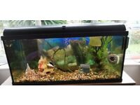 Fish tank with tropical fish and accessories