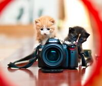 WANTED: A PHOTOGRAPHER TO TAKE CUTE PHOTOS FOR CAT RESCUE