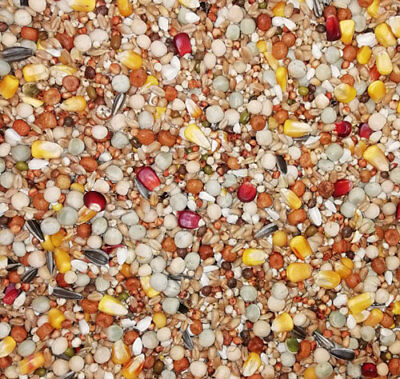 20Kg Pigeon Corn, Breeding & Racing Mix, Spod Mix Partical Bait