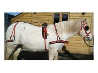 Saddle & pony harness