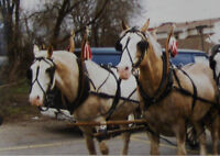 Double Horse Harness and Collars