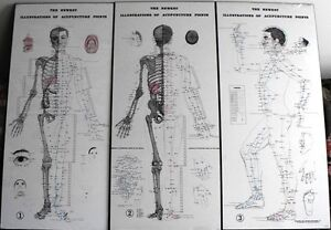 SET of THREE ANATOMICAL ACUPUNCTURE CHARTS