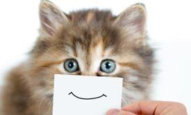 Cat/Pet Sitter Available in Saffron Walden Area