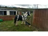 ***look full yoke for sale cheap horse cart n 2 harness***