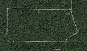 Terrain boisé / Wood lot for sale