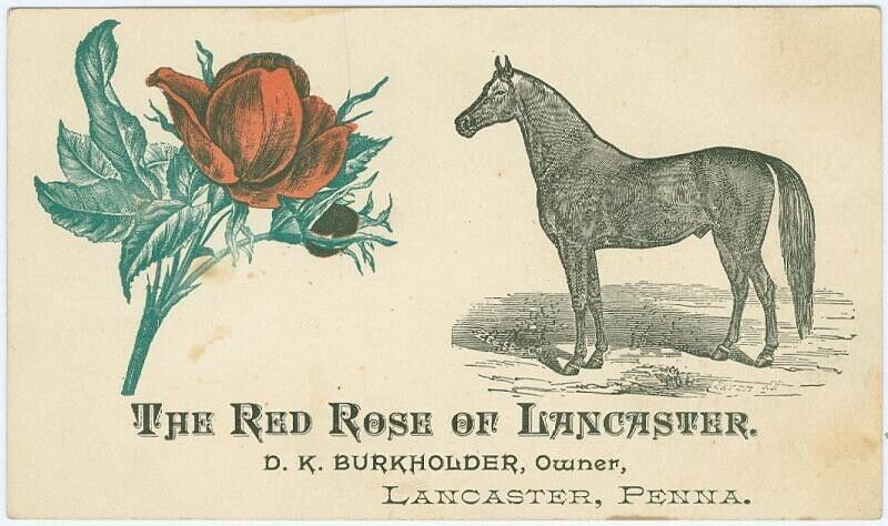 The Red Rose of Lancaster, Lancaster PA