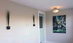 Completely Renovated Downtown 3 bed 1 bath apartment for rent