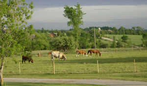 HORSE FENCE...All Types of livestock, equine and farm fence, Kawartha Lakes Peterborough Area image 3