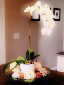 Cream Coloured Ceramic Plant Pot Vase[15cmx13cmx14cm].For orchids, plants,herbs.. etc..
