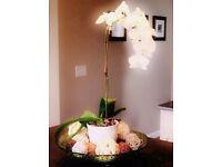 Cream Coloured Ceramic Plant Pot Vase[15cmx13cmx14cm].For orchids, plants,herbs.. etc..