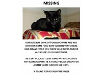 MISSING CAT FROM WEST HARNHAM, SALISBURY