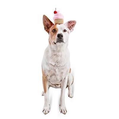 Bootique Dog Headband Headpiece Costume Sweet Dreams Cupcake Birthday Party - Cupcake Kostüm Hunde