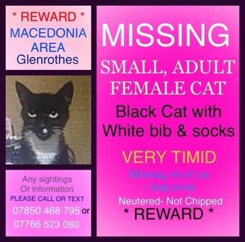MISSING CAT | in Glenrothes, Fife | Gumtree