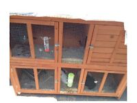Two male rabbits and double hutch