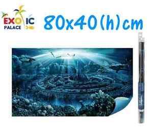 Hydor h2show atlantis sfondo con gel per acquario 80x40cm for Oggetti per acquario