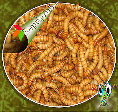 250 500  1000  2000  5000 10 000  20 000 Live Mealworms Free Shipping