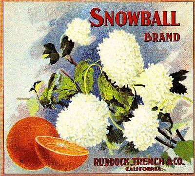 Riverside Snowball Flowers Orange Citrus Fruit Crate Label Art Print