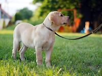 Pet care and dog walking in Holly area
