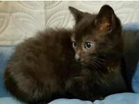 Rescue kittens looking for perfect homes