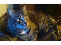 Tabby cat missy blue plastic flea collar James cook hospital area