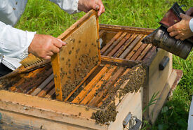Beehive For Sale £250 National.