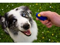Dog training help online