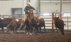 A 12 yr old Sorrel Gelding Penning and Ranch Horse For Sale