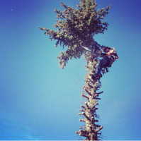 Tree Pruning/ Removal/ Topping/ Shaping/ Trimming