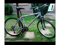Bike SARACEN