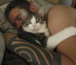 Cat Sitting Melba Belconnen Area Preview