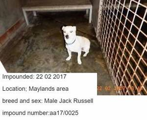 FOUND Pets - City of Bayswater, Morley & surrounding areas Maylands Bayswater Area Preview