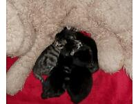 4 Beautiful wee kittens