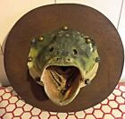 Unbranded Bass Fish Taxidermy