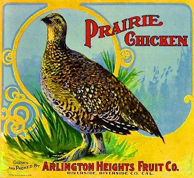 Riverside Arlington Prairie Chicken #2 Orange Citrus Fruit Crate Label Art Print