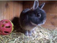 Gorgeous Adult Rabbit