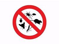 Pest Control Service - London & Essex